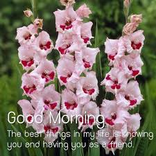 flower good morning images pics photo download