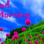 nature good morning images pics wallpaper photo download