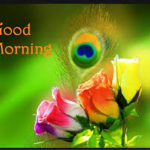 flower good morning images wallpaper pictures photo download