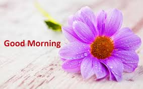 2019 happy good morning images pictures photo hd download
