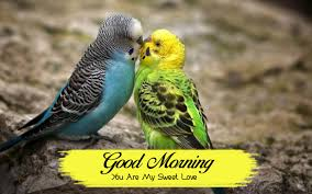 new bird good morning photo wallpaper pictures download