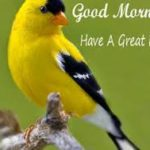 nice bird good morning images wallpaper photo free hd download
