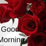 Red rose good morning images photo pictures hd download