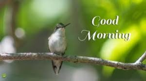 bird good morning images pictures pics wallpaper hd