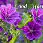 flower good morning images photo wallpaper pics download