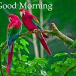 bird good morning images wallpaper pictures free hd download