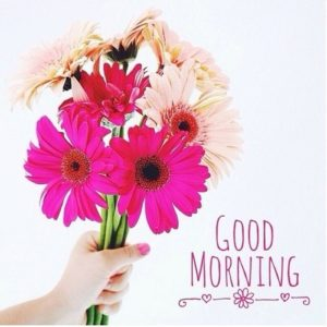 flower good morning images wallpaper pictures download