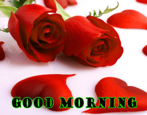 Red rose good morning images pictures wallpaper hd